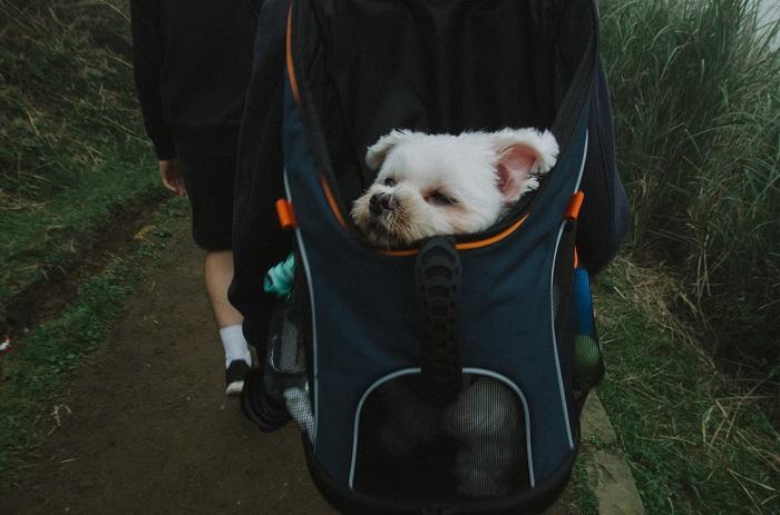 Ruksak a taška pre psa